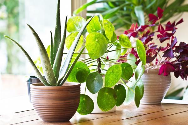 研究:「室內」空汙比戶外更致命!這3種盆栽有效降PM2.5