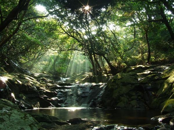 陽明山獲全球首座「都會寧靜公園」!45分貝以下,讓心寂靜的2條山徑推薦