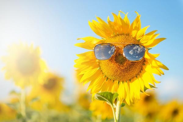 人生下半場,靠自己變順!理性分析:幸福人的6種特質,你具備了嗎?