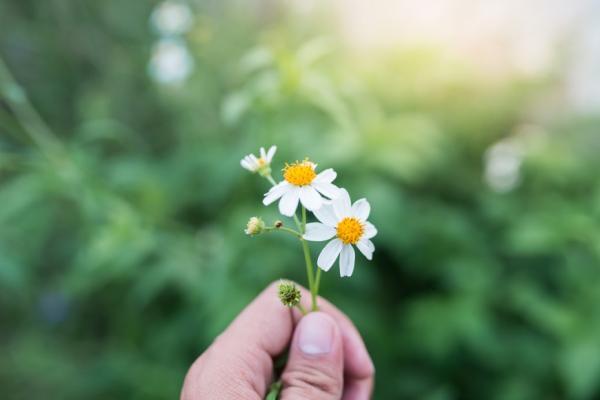 如何面對最愛的人過世?苦苓:莊子沒有哭,卻欣然唱歌的人生哲理