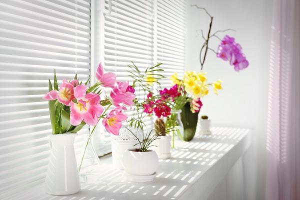 如何第一次養蘭花、做苔玉就上手?風格植栽工作坊