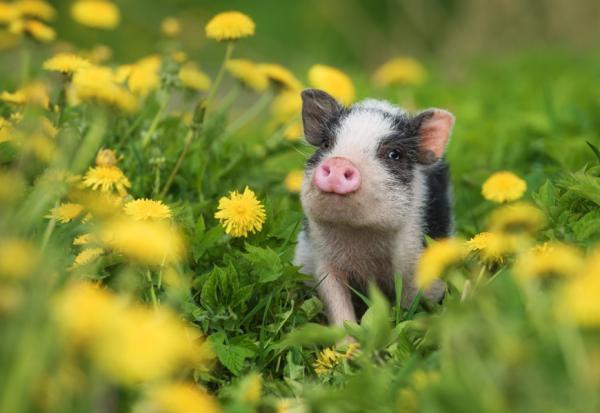 關於幸福,哲學家怎麼說?傅佩榮:想一想,要做快樂的豬,還是痛苦的蘇格拉底?