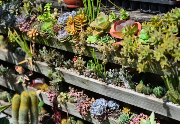 植物是最好的居家布置!如何用多肉植物與空氣鳳梨,打造自然系美宅?