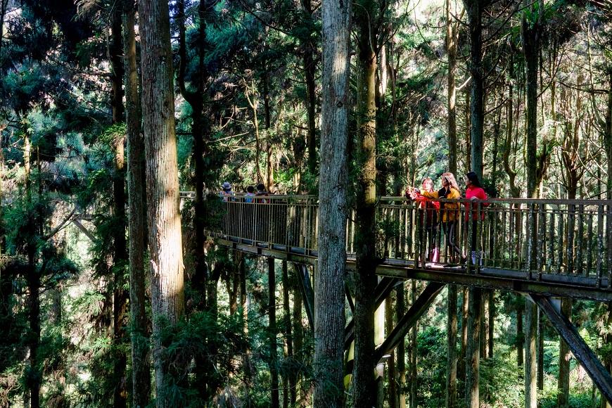 待2個小時就有效!溪頭森林輕旅行路線,台大醫師研究證實提升免疫力