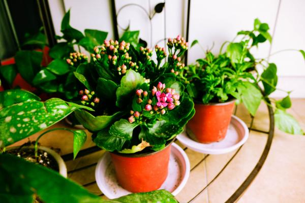讓花草陪伴我們生活,50後療癒身心的園藝治療法