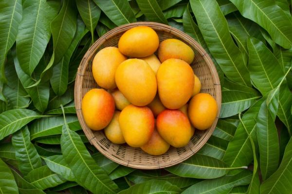 吃芒果好處多!營養師李婉萍:護眼、抗癌、防骨質疏鬆,應該怎麼挑?