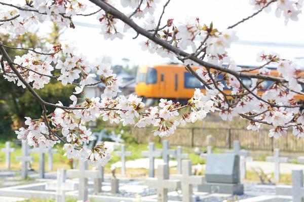 打破血緣與婚姻的藩籬,日本幸福老人找「墓友」