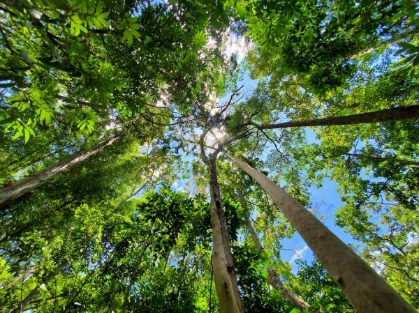 追葉、看雪、賞鳥,釋放心靈深層壓力!5個秋冬值得一去的台灣森林旅行景點