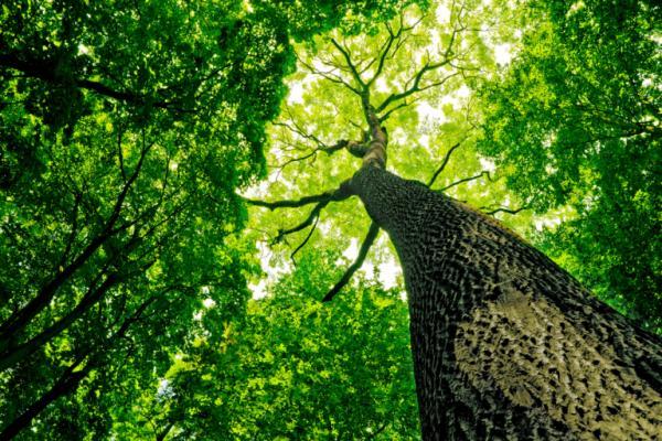 親近樹木會獲得健康!50歲後一定要知道的森林療法