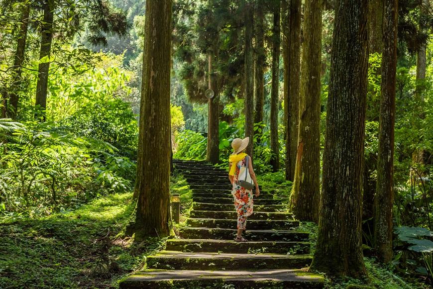 研究新知|每週30分鐘森林散步,公園也行!台大教授余家斌:助眠、增強心血管、降低癌症死亡率