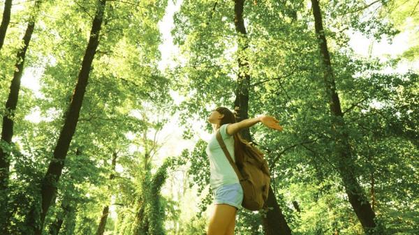 每天自然散步2小時防癌!樹療師:樹木對健康的6大好處,再忙也要森林浴