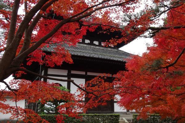 【梁旅珠專欄】京都秋日散步 不在旅遊導覽上的紅葉秘境