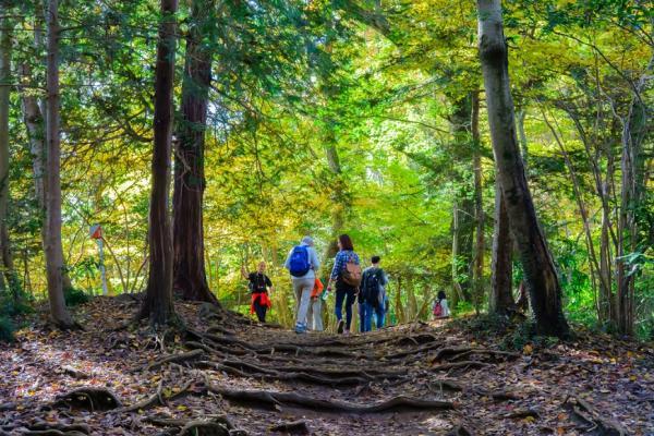常登丘陵遠勝偶爾爬高山!日本流行「走丘」,對身體好又不太累