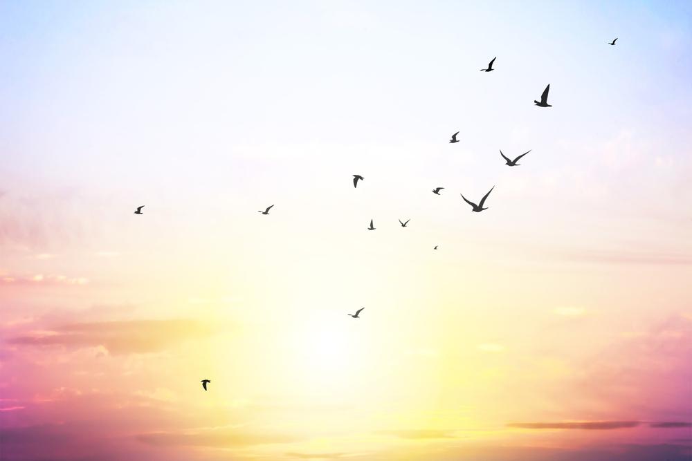 與自然融為一體的極致:什麼是天葬?